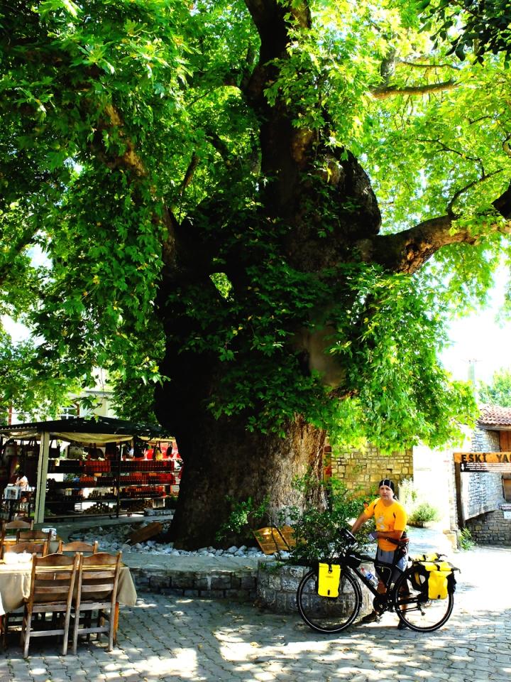 1995 yılında 1880 yaşında tabiat anıtı olarak tescil ettirilen 2,8 metre çapındaki çınarın çevresi 8,7 metre olarak ölçüldü. 35 metre yüksekliğinde olduğu belirlenen ağaç 706 metrekarelik alanı kaplıyor.